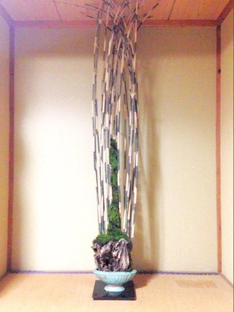 竹・苔・幹