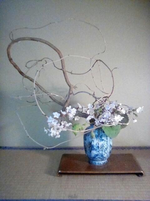 藤蔓・桜・蕗