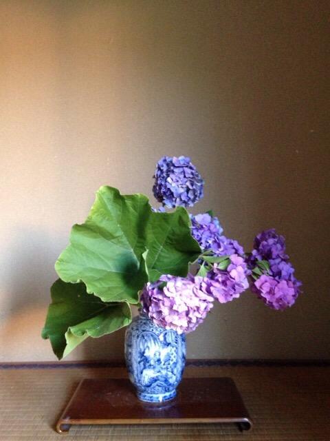 南瓜・紫陽花