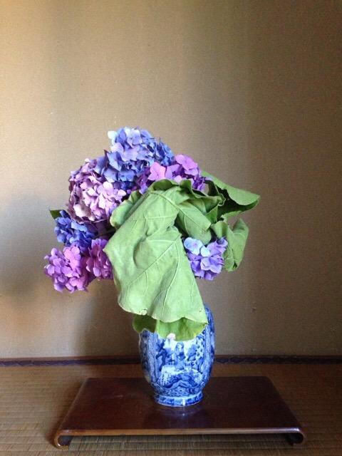 紫陽花・南瓜